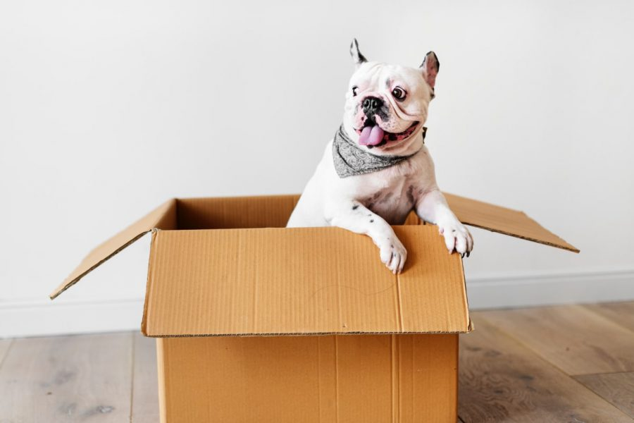 The Ultimate Guide to Choosing Pet Friendly Paint
